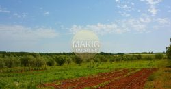 ISTRIA – Agricultural land with approx. 14300m2 near Novigrad